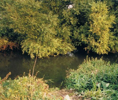 Fishers-Green-Barbel-Swim